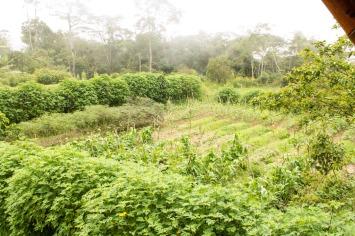 A cosechar nuestro alimento. Foto: Ricardo Márquez.