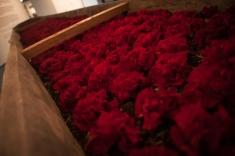 Al igual que esta típica canoa, cuya instalación lleva por nombre 'La herida', una herida muy larga y tapada con flores rojas, que nos enseña que a pesar del dolor aún hay belleza en este mundo por descubrir.