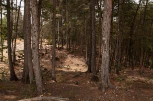 Así como la entrada al parque que no cuesta más de 5mil pesos y que incluye un viaje de más de 30 minutos en metrocable, para poder disfrutar de los exuberantes bosques de niebla, que son de las riquezas naturales más importantes del territorio.