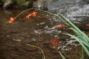 Por eso es indispensable dejar correr limpia el agua que fluye por cada uno de los arroyos, permitiendo el libre disfrute para las nuevas generaciones.