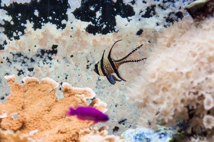 La diversa cantidad de especies que hay en el acuario es uno de los más fascinantes llamativos de éste.