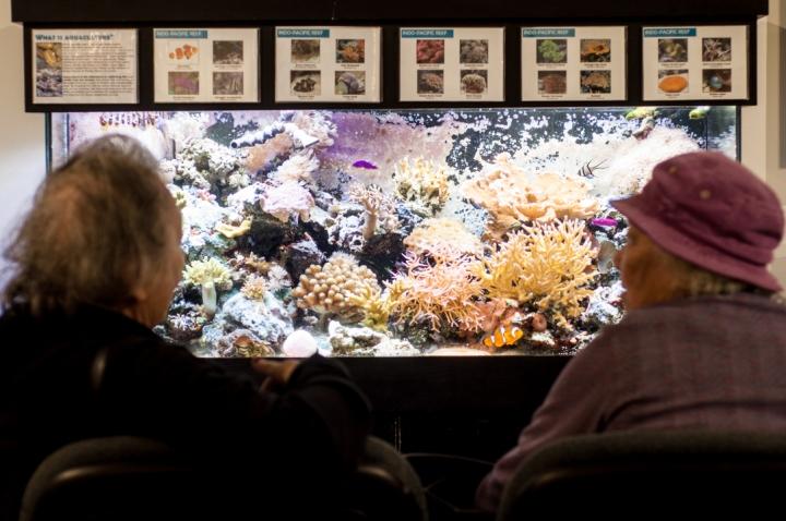 La exhibición de los ecosistemas marinos del smitsoniano conocido en sus siglas por inglés SMEE (Smithsonian Marine Ecosystems Exhibit) fue abierto al público el 27 de agosto del año 2001.