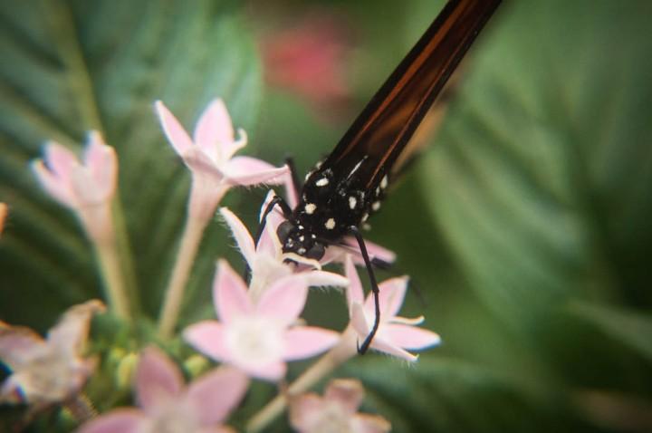 2.    El Lugar se inauguró oficialmente en 2008 como un ecosistema en el que vivieran y se reprodujeran cerca de 80 mariposas de seis especies diferentes  […]